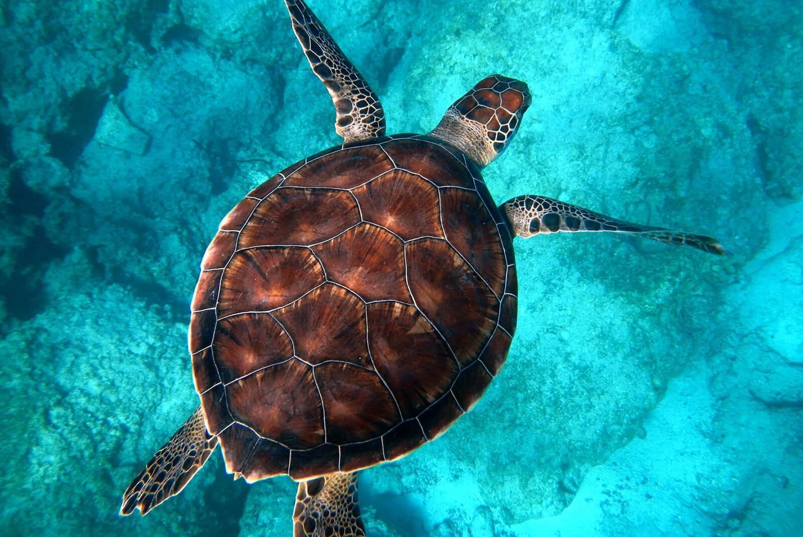 Morski Detox Organique. Oczyszczająca terapia z morskich głębin 120 minut