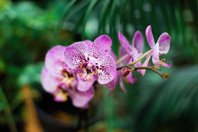 Pachnąca Orchidea - kompleksowa pielęgnacja i relaks 90 minut