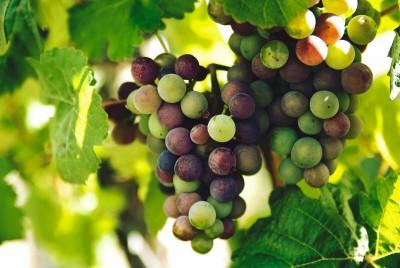 Owocowy Detox winogronowy peeling cukrowy oraz owocowy masaż ciała 90 minut